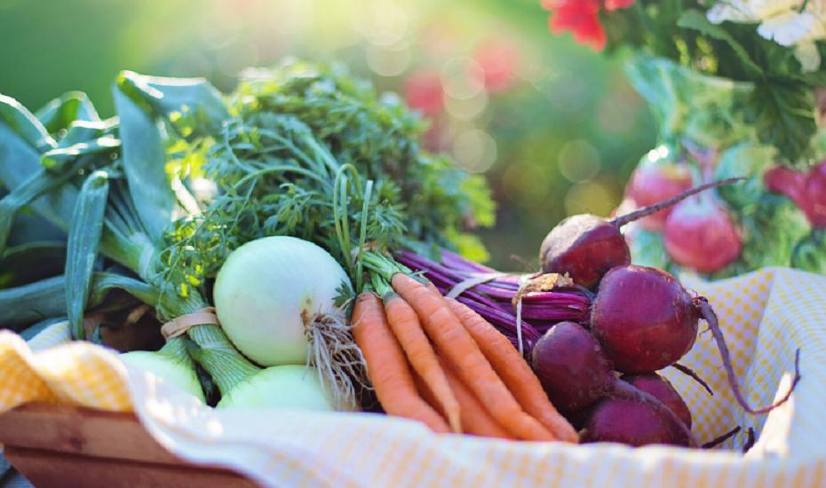 Kräuter und Gemüse im Topf anpflanzen – Gärtnern ohne Garten