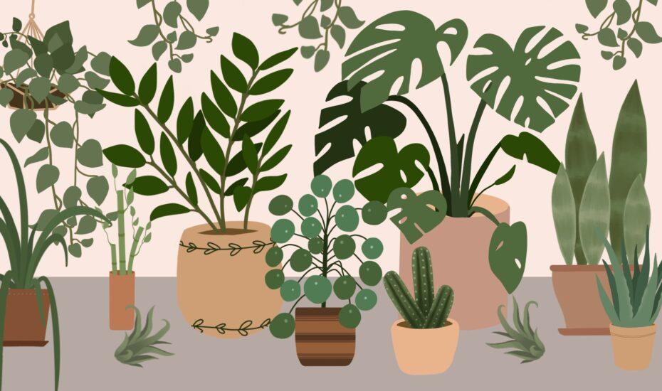 Pflanzen, die das WG-Leben überleben